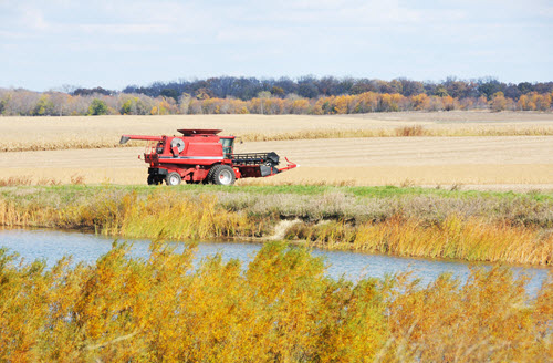 combining wheat near stream
