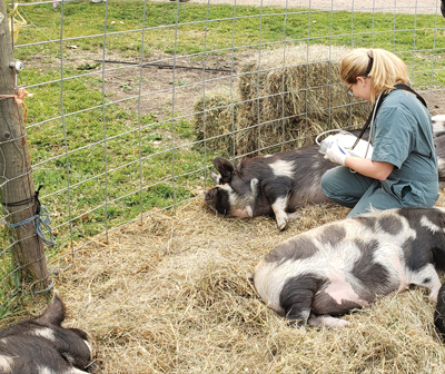 Jessica Law checking on pigs
