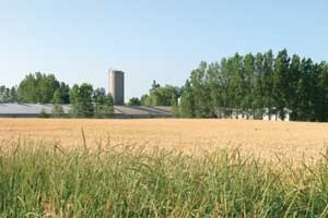 Canada S Seasonal Ag Worker Program Dodges Most Temporary Worker Reforms Better Farming