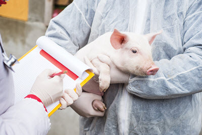 veterinarian holding a pig